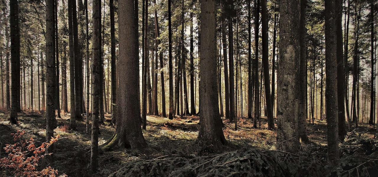 Ile zarabia leśniczy w Polsce
